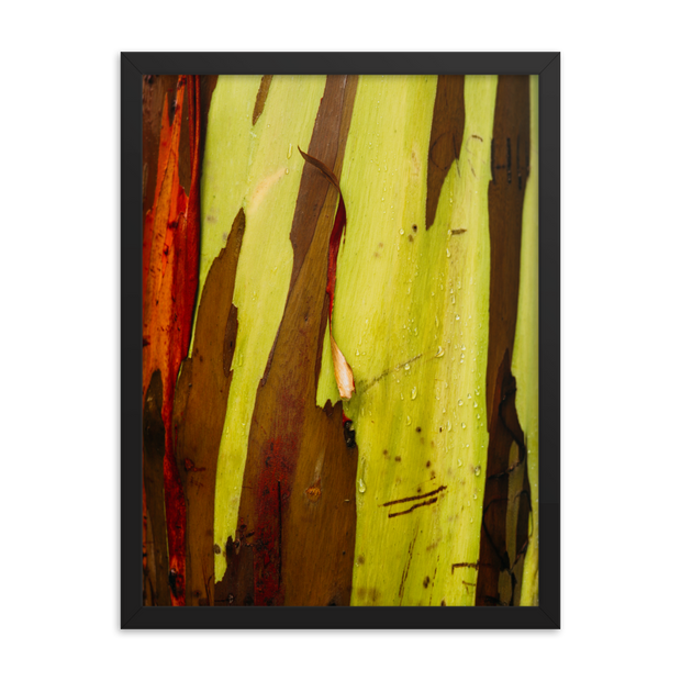 Painted Trees Framed poster