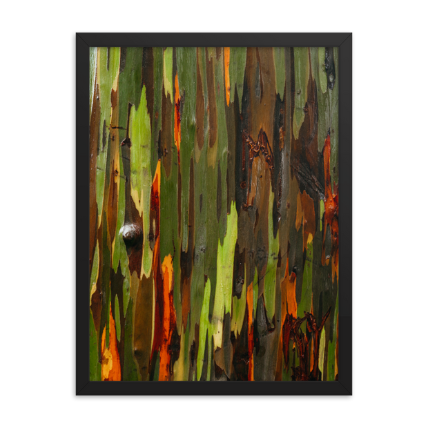 Kauai Painted Trees Framed poster