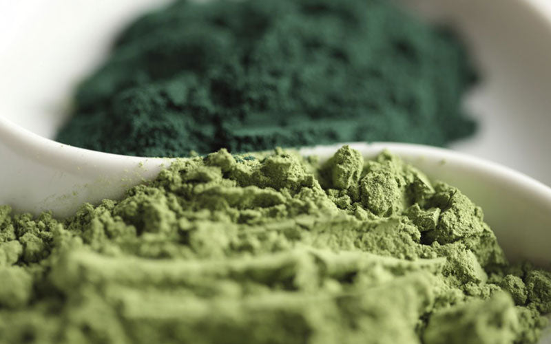 Chlorella vs. Spirulina: Which Is the Best?