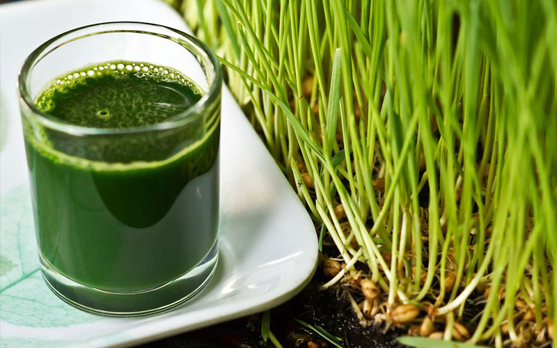 Wheatgrass Facts and Benefits: Everything You Need to Know