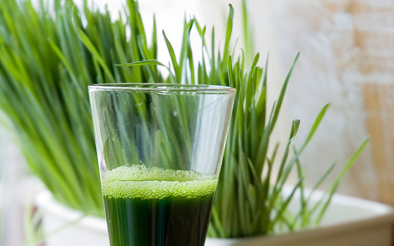 Top Wheatgrass Benefits and Side Effects