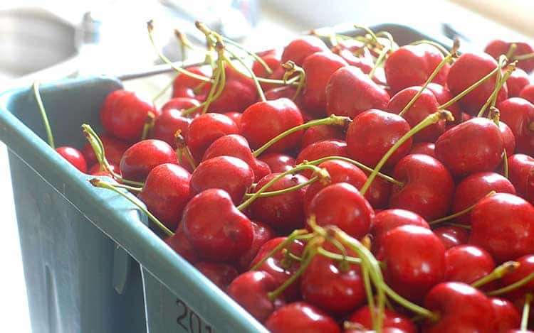 why acerola cherry is the best vitamin c