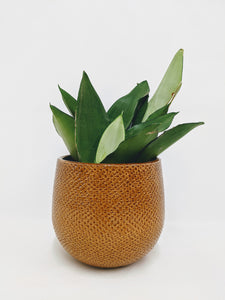 Gabriel pot small - 12cm