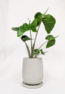 Anther + Moss - The Edith in Concrete, 21cm