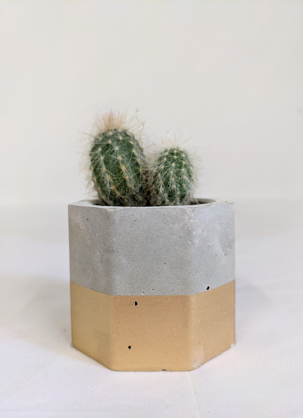 Concrete octagon by Kaylyn - gold dip - 4cm