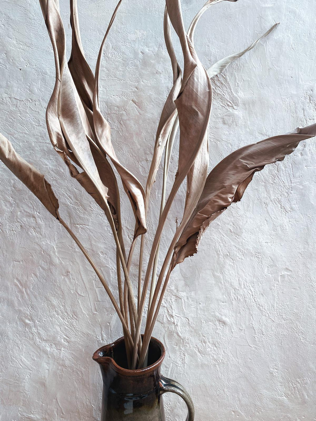 Dried Strelitzia leaves