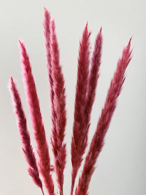 Pampas Wands in Pink HALF PRICE WAS £12