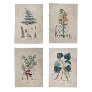 Paper Vintage Reproduction Botanical Prints