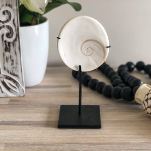 Small natural Eye of Shiva oval shaped shell with natural swirl pattern set on a small black single stem display stand.