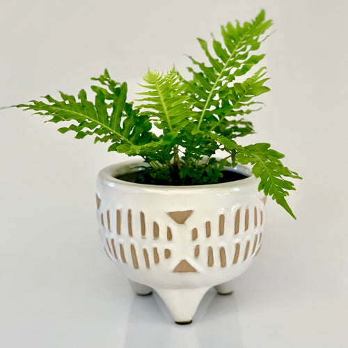 Coastal looking ceramic footed planter pot finished in white gloss and featuring a striking natural design on the outside.