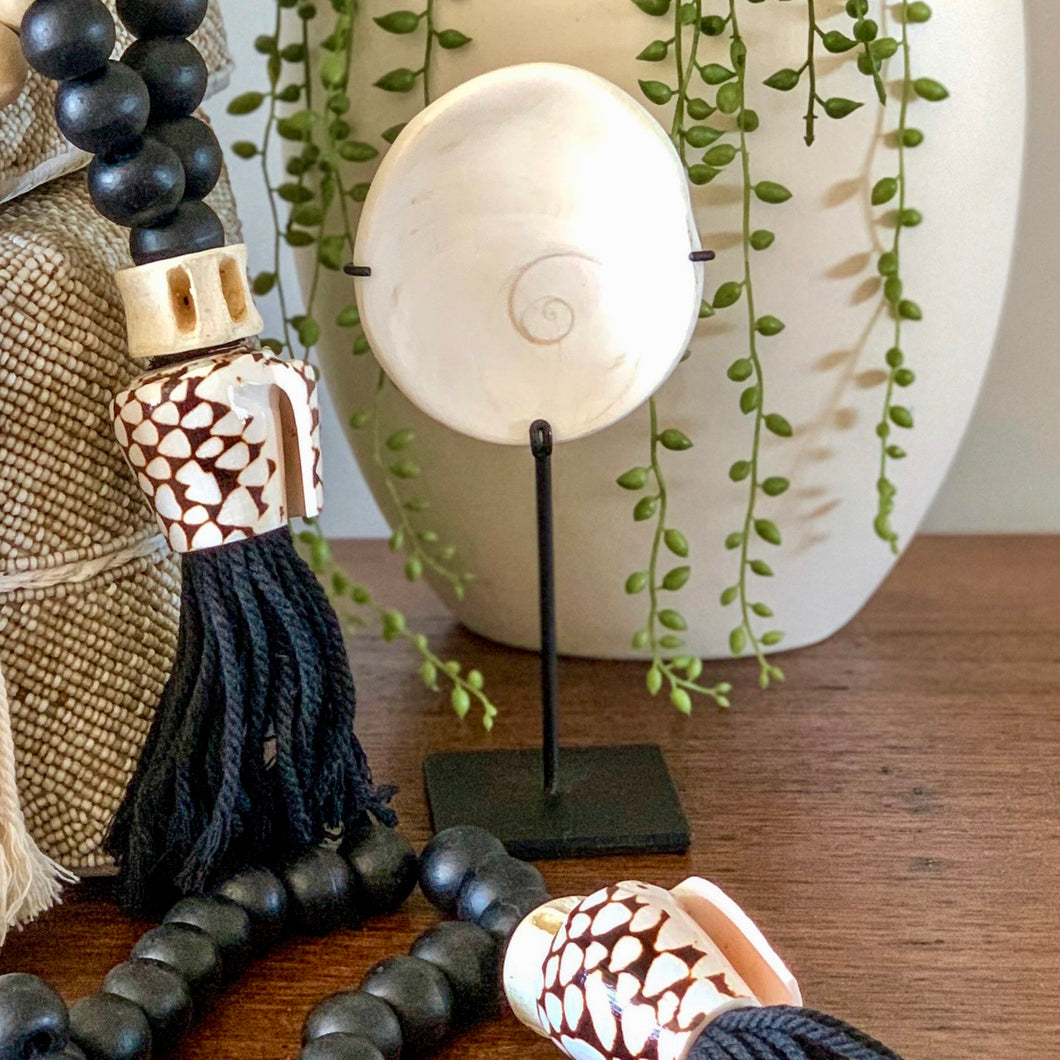 Small but beautiful natural Shiva shell sitting neatly on a small black stand.