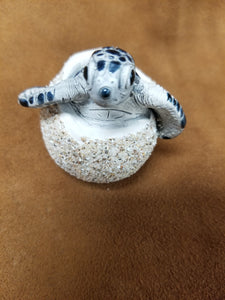 Hatching Turtle Eggs