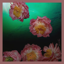 Load image into Gallery viewer, Peony