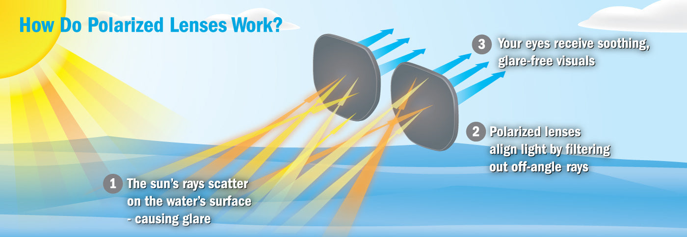 Polarized Lenses Demonstration Graphic