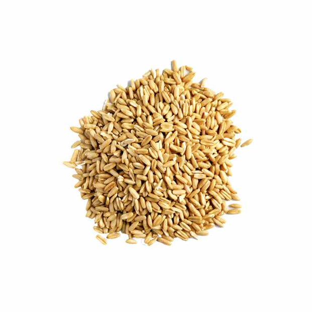 Organic / Bio Oat Grains