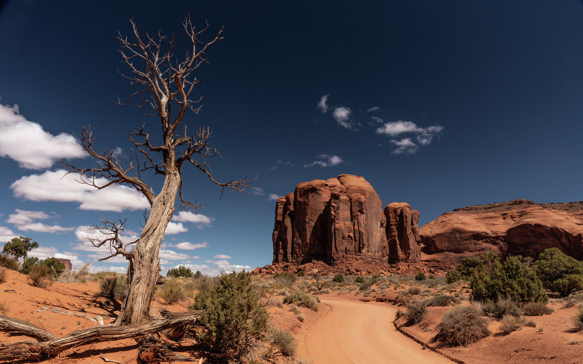 Utah - Monument Valley - Dead Tree
