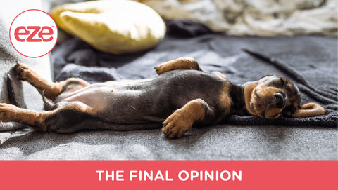 The Final Opinion on Allowing Dogs in your Bed