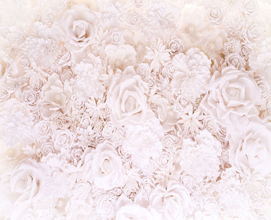 White rose flower background