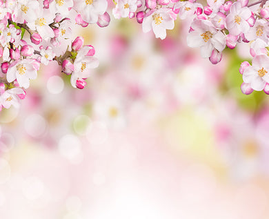 Peach flower background
