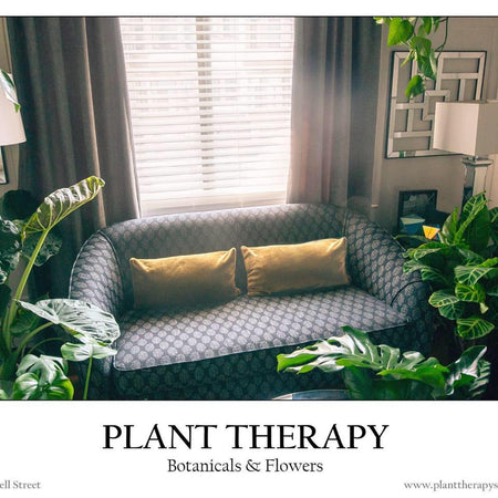 Plant Therapy SF