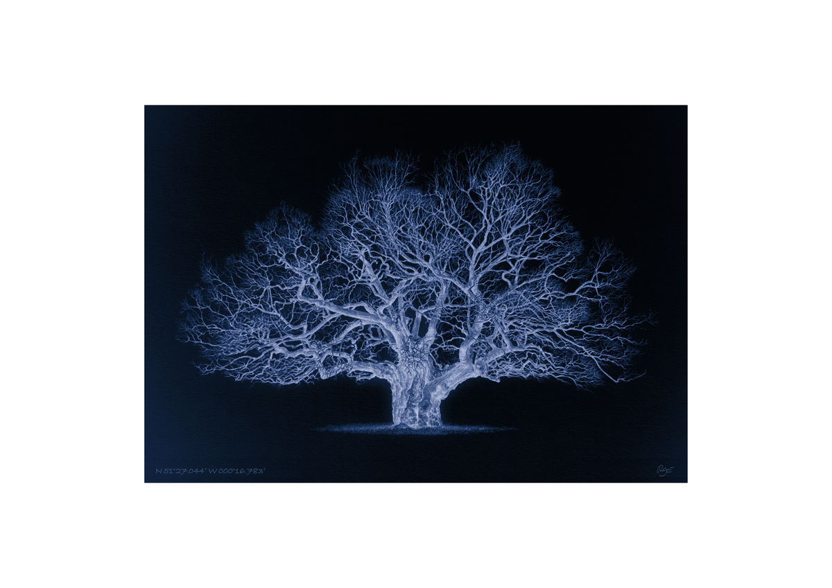 Oak – N 51°27.044' W 000°16.783' Duotone Blue (A3)