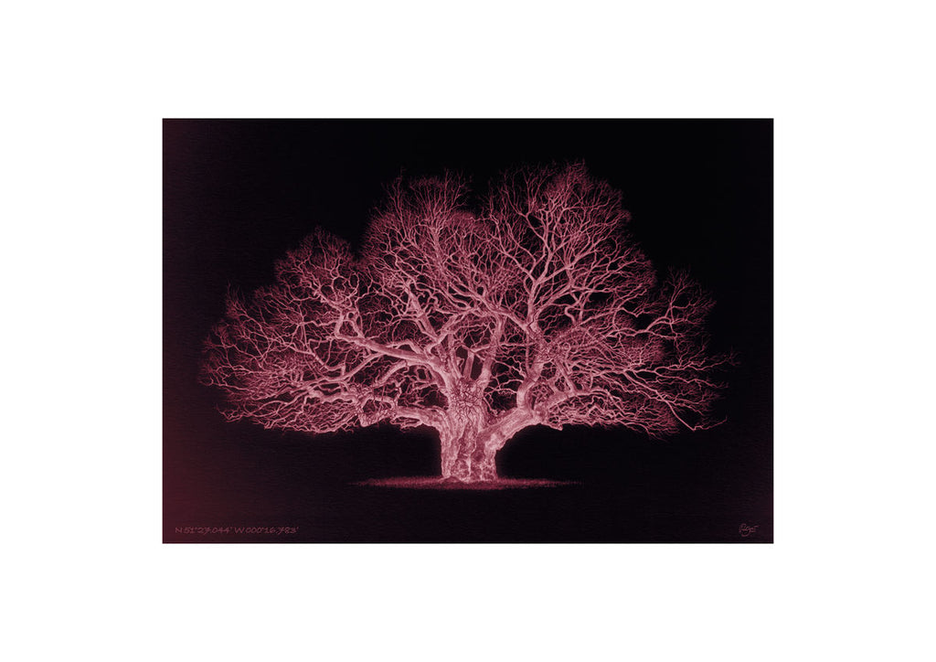 Oak – N 51°27.044' W 000°16.783' Duotone Red (A3)