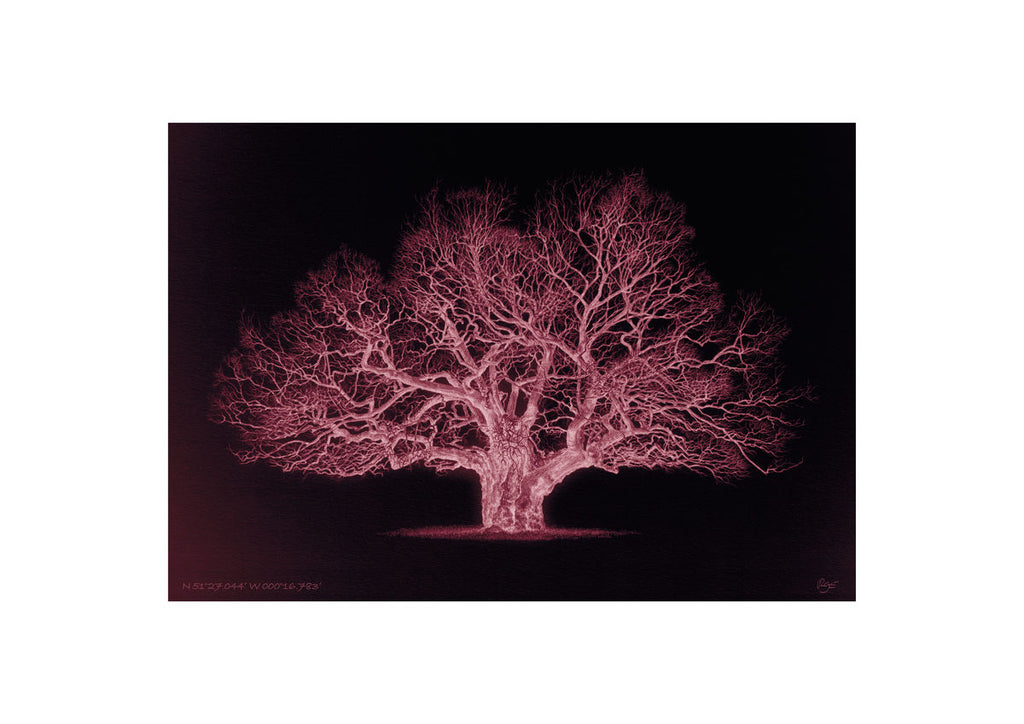 Oak – N 51°27.044' W 000°16.783' Duotone Red (A4)
