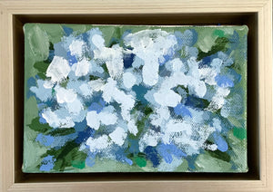 Blue Hydrangeas in Bloom- 6x4