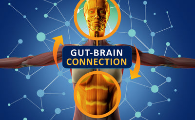 Syntol Probiotic The Gut Brain Connection
