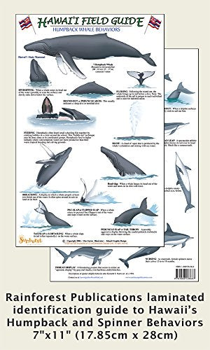 Humpback Whale & Spinner Dolphin Behaviors Guide (Laminated Single Sheet Field Guide)