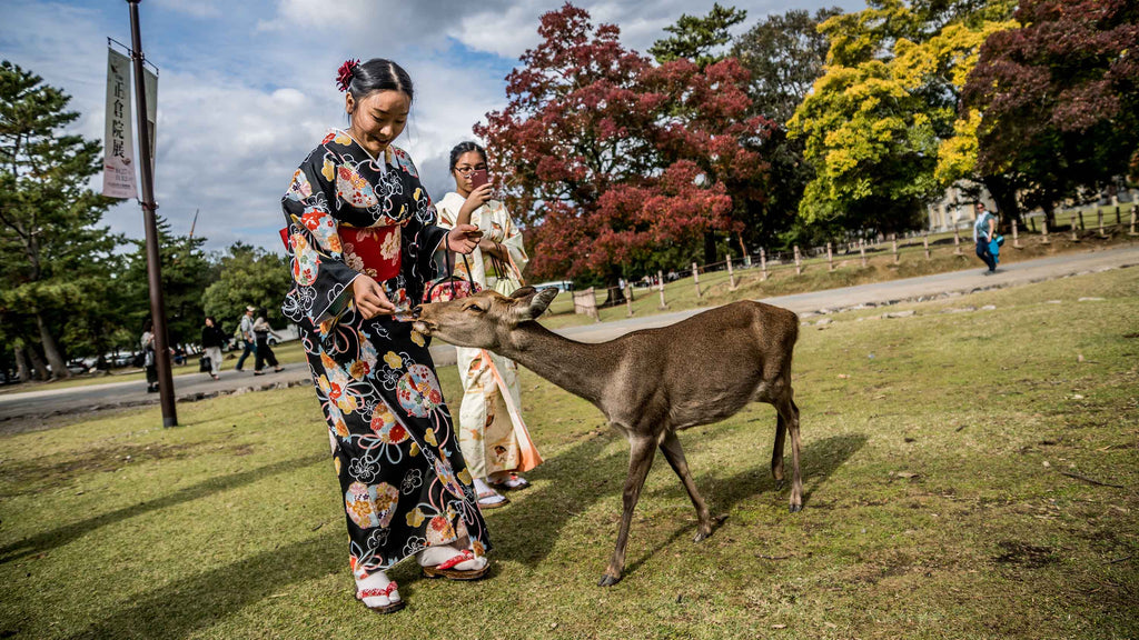 Nara Deer Park - Traveling To Japan ? MUST COME HERE !
