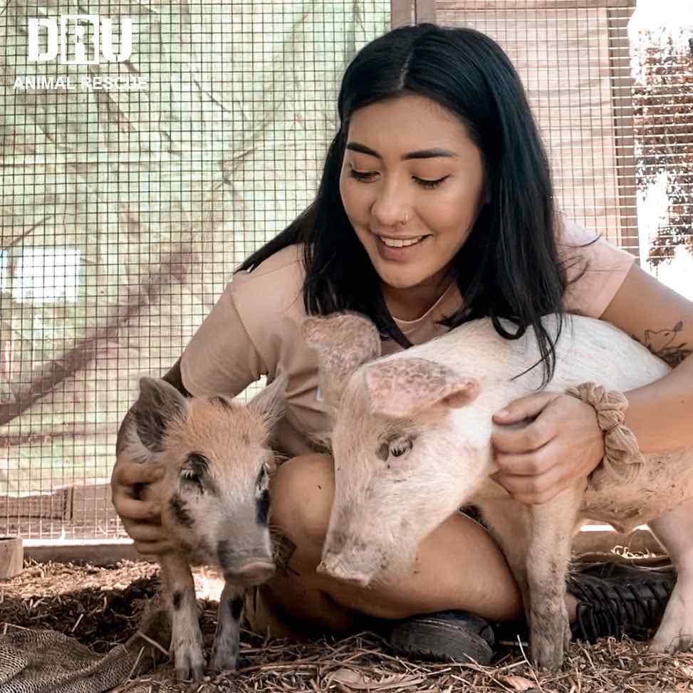 Allana and rescued pigs from bacon, pork and ham industry