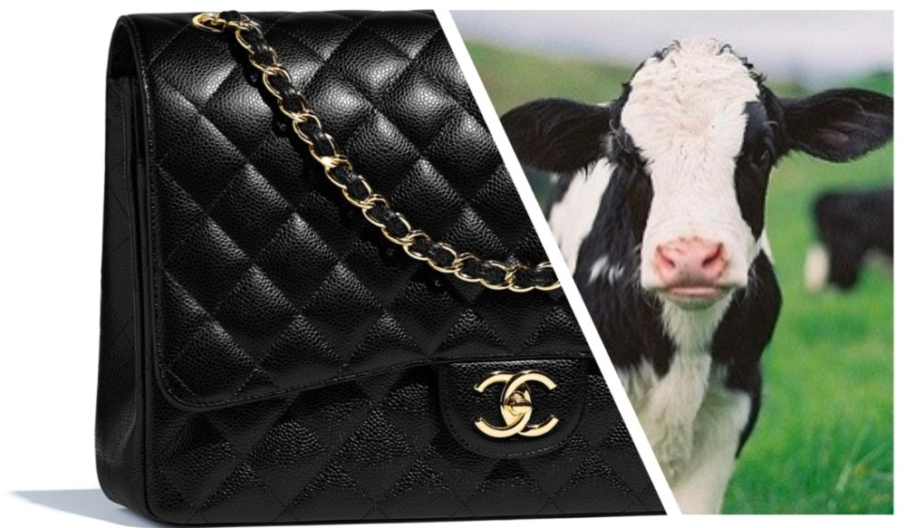 Luxury bags are often made from baby cows, prized for their skin softness