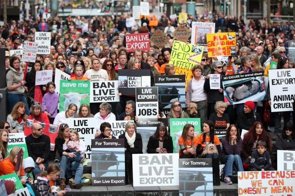 live export demonstration with posters