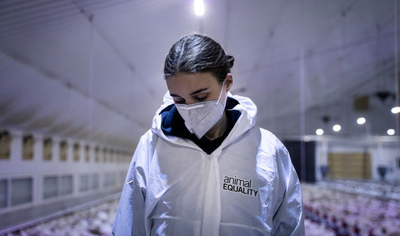 rooney mara wearing animal equality coveralls in chicken farm