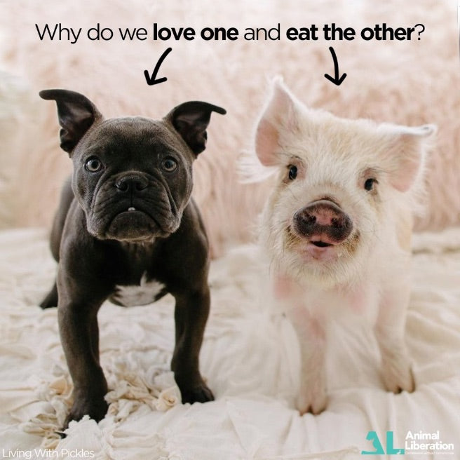bulldog and pig looking similar to each other, writing says 'why love one but eat the other'