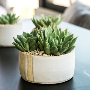 Natural Striped Pot