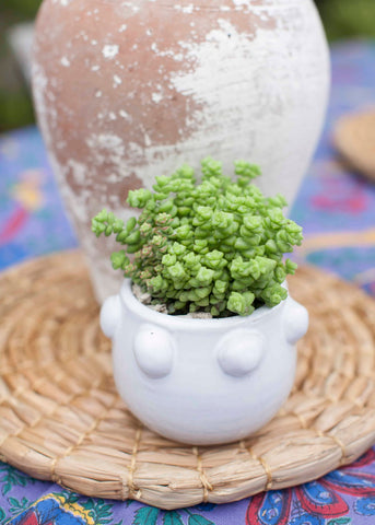 Mini Bumpy Pot