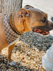 Cash Cuban Link Collar: Gold