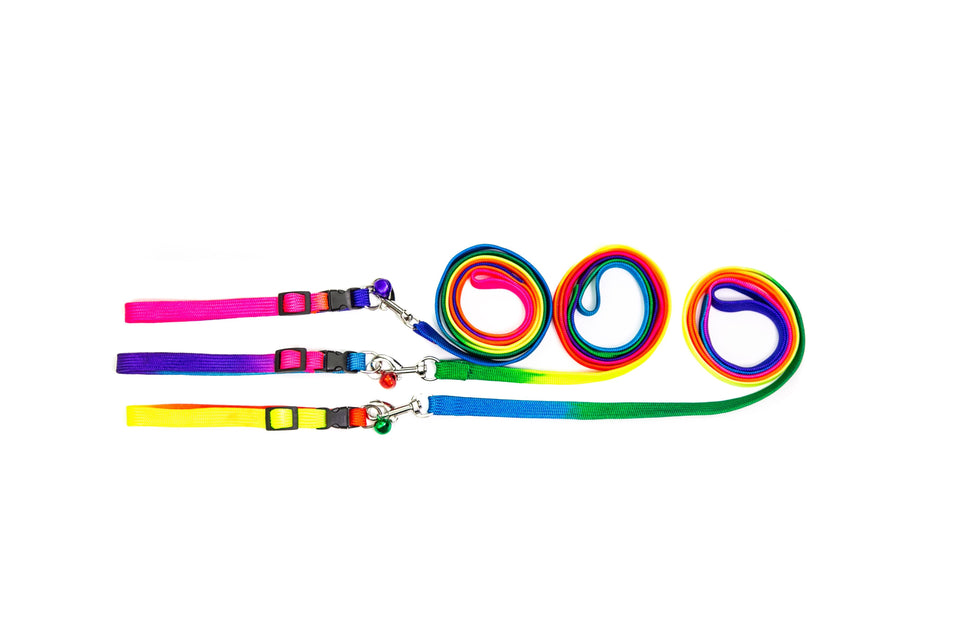 Cool Vibes Collar & Leash Set