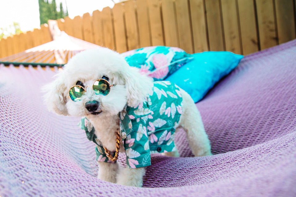 Puppy Bahama Top