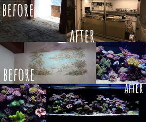 Points to consider when setting up a marine tank
