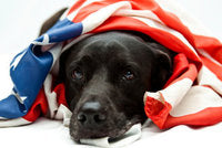 Easing Pet Anxiety The All Natural Way This 4th of July