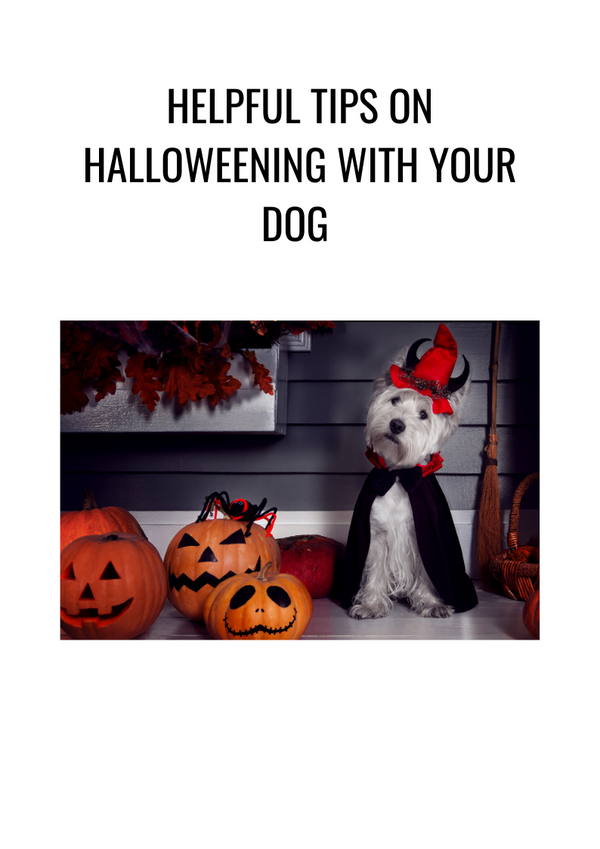 HELPFUL TIPS ON HOW TO HALLOWEEN WITH YOUR DOG