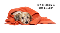How To Choose A Safe Shampoo