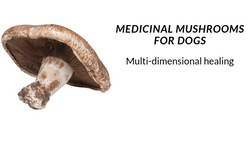 Medicinal Mushrooms For Dogs: Multi-Dimensional Healing
