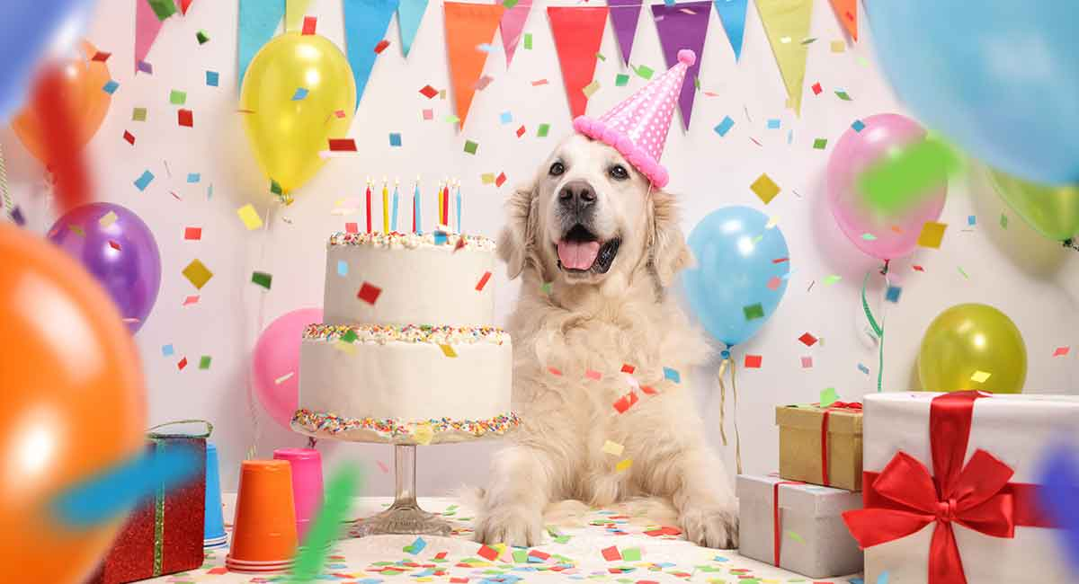 Let Your Dog Eat Birthday Cake Paw Naturals