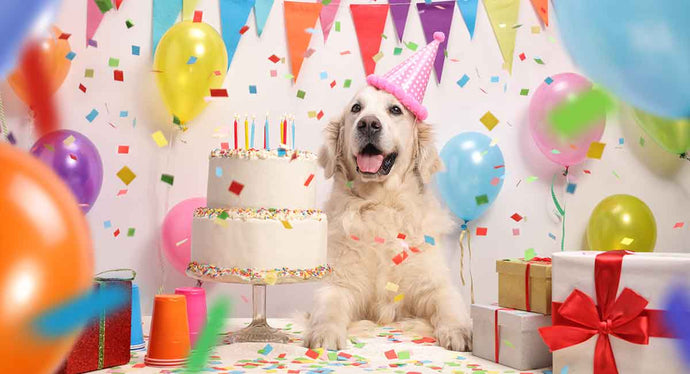 Let Your Dog Eat (Birthday) Cake!