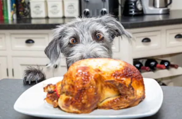 HOW TO HAVE A SAFE THANKSGIVING WITH YOUR PUP