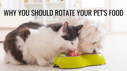 Rotation & Variety in your Pet's Diet